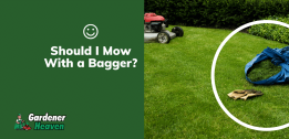 The Best Lawn Mower With Bagger | Top 6 Detailed Reviews